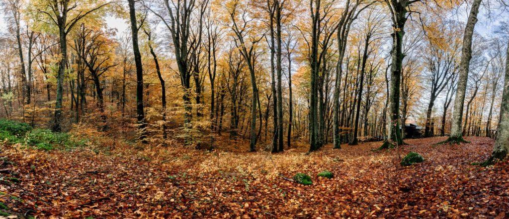 faggeta vetusta del monte cimino, fotografia di paesaggio, panoramica, foto panoramica, soriano nel cimino, luca storri fotografo, autunno, foliage, fotografia d'autunno